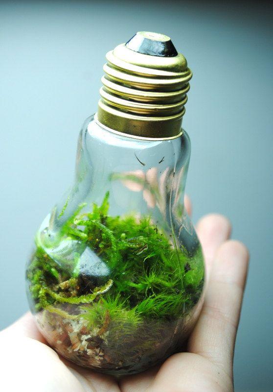 bulb moss