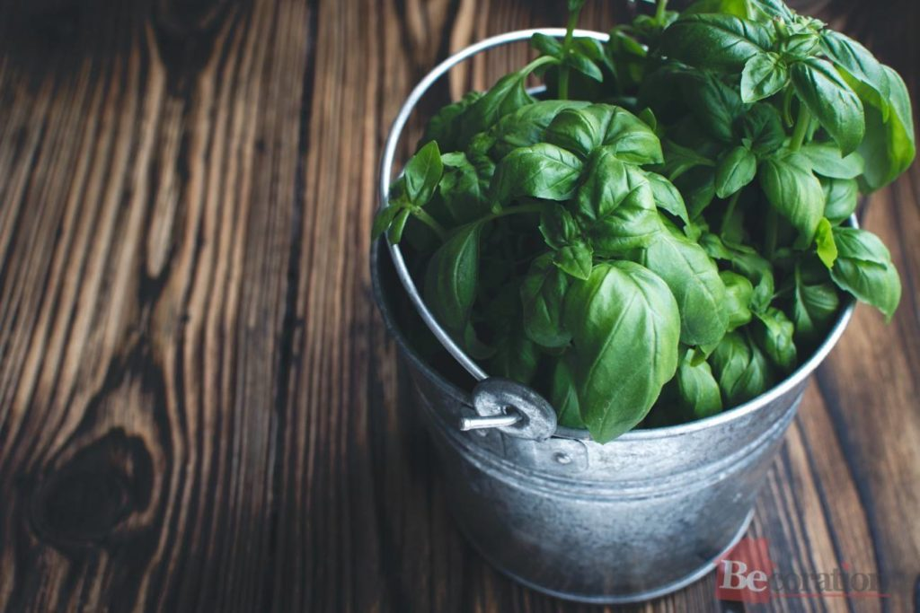 basil fragrance