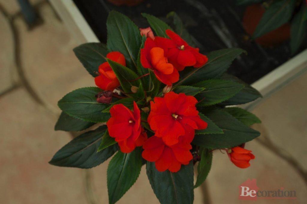 indoor_plants02