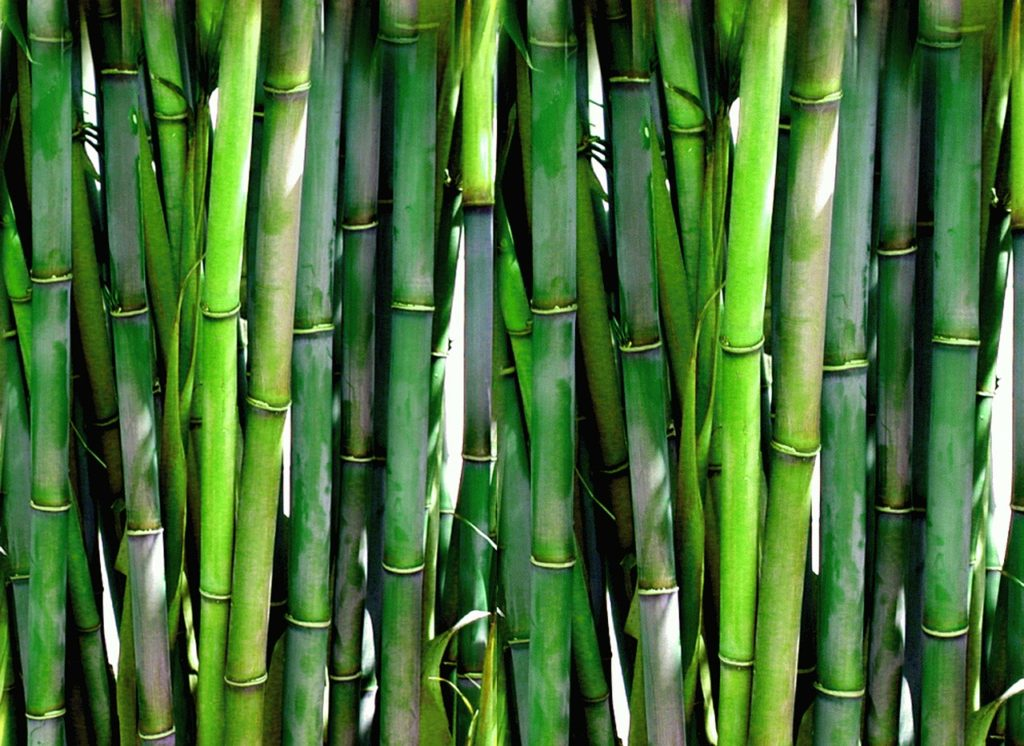 bamboo_decoration_2