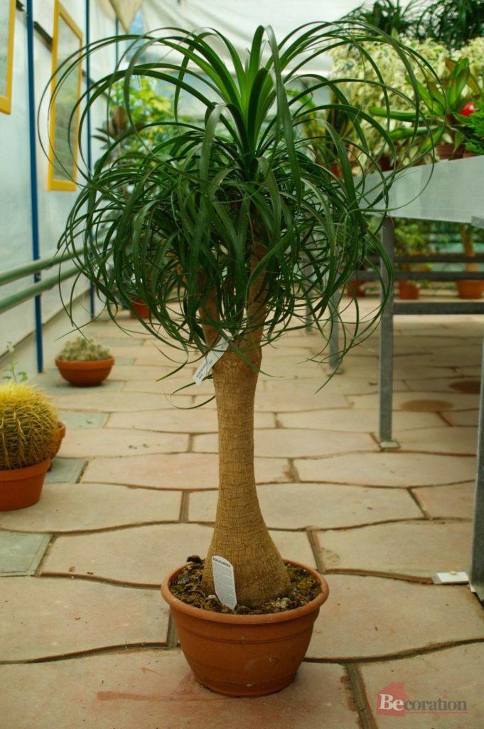 indoor_plants04
