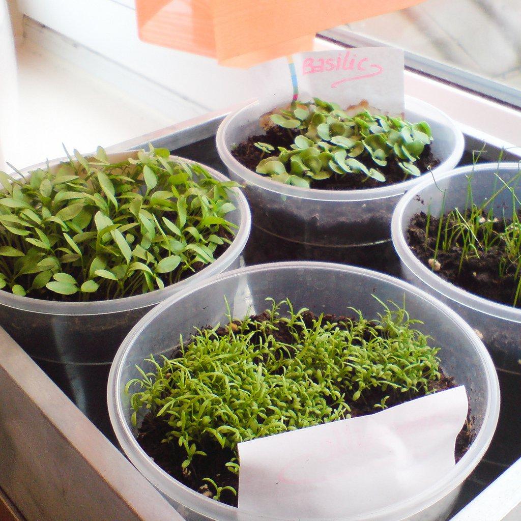 garden-DIY