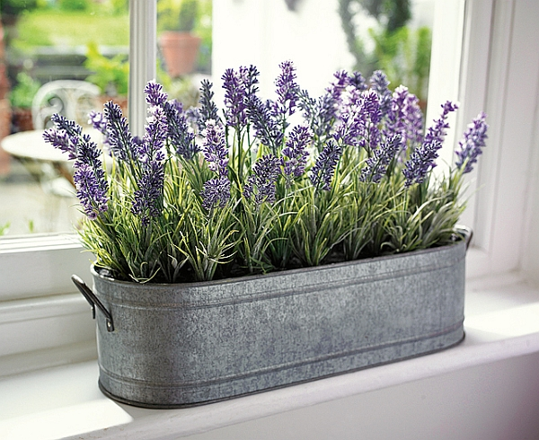 delicious-scents-lavender
